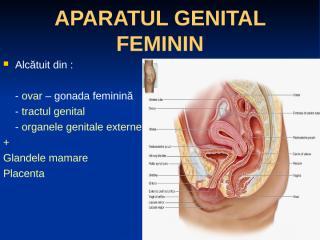 curs 10 - aparatul genital feminin.ppt