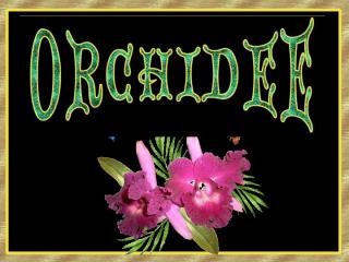 Orchidee.pps
